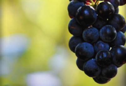 Le troisième Café Valeurs autour du vin de l'association